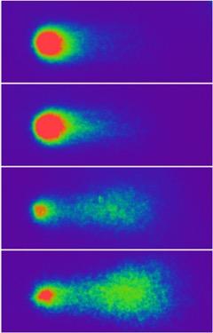 DNA Repair Group   Pollen World
